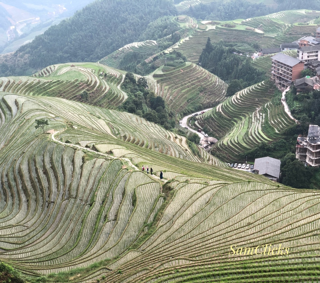 Longji Rice Terraces: The Dragon's Back section in Ping'an. See the people?